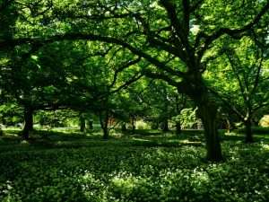 Green Space in the Heart of the City, Blackweir Woods