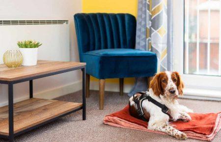 Dog friendly Cardiff bay serviced apartment